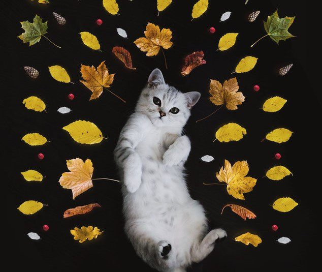 Cat and fall leaves